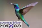 แบบทดสอบจิตวิทยา – นกเปลี่ยนสี