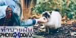 [ทำนายฝัน-ตัวเลข] ฝันว่าได้รับแมวมาเลี้ยง