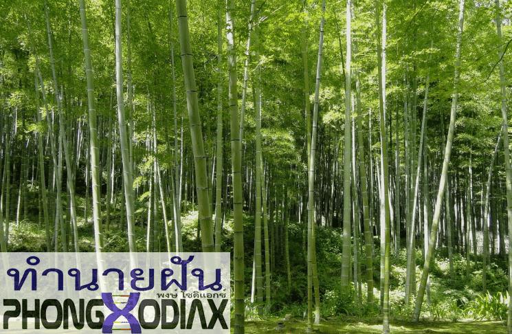 [ทำนายฝัน-ตัวเลข] ฝันว่าได้เดินผ่านกอไผ่ หรือป่าไผ่