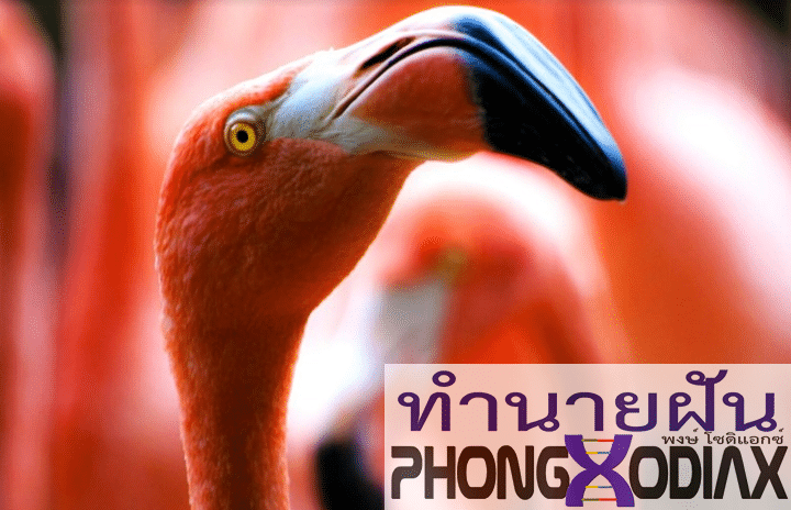 [ทำนายฝัน-ตัวเลข] ฝันเห็นนกที่มีจะงอยปากขนาดใหญ่