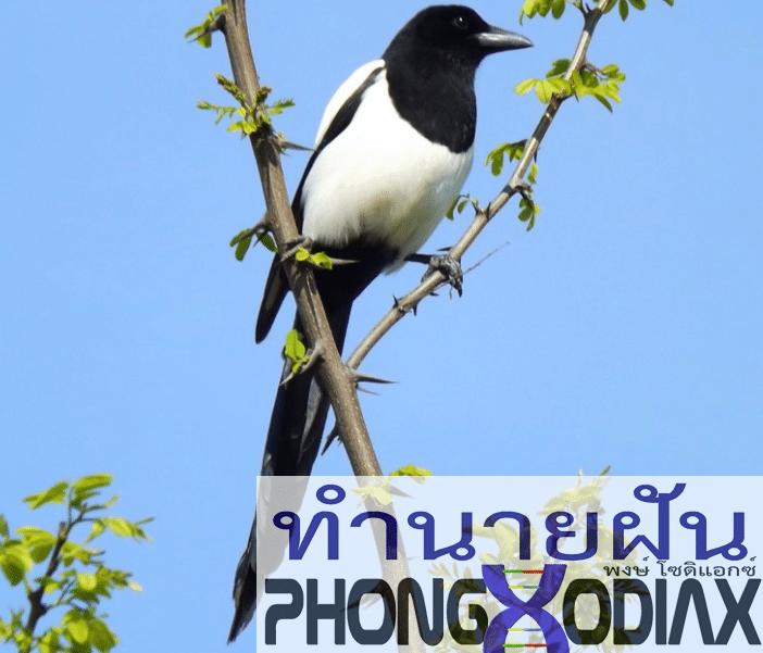 [ทำนายฝัน-ตัวเลข] ฝันเห็นนกสีขาวผสมดำ