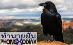 [ทำนายฝัน-ตัวเลข] ฝันเห็นนกสีดำ