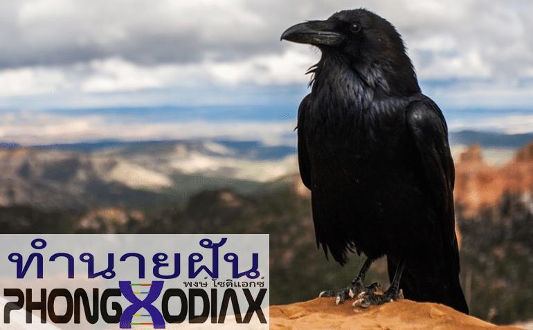 [ทำนายฝัน-ตัวเลข] ฝันเห็นนกสีดำ,ฝันเห็นนกตัวใหญ่สีดํา