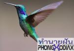 [ทำนายฝัน-ตัวเลข] ฝันเห็นนกสีน้ำเงิน