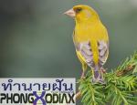 [ทำนายฝัน-ตัวเลข] ฝันเห็นนกสีเหลือง