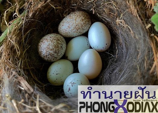 [ทำนายฝัน-ตัวเลข] ฝันเห็นรังนกที่เต็มไปด้วยไข่