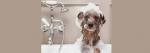 [ทำนายฝัน-ตัวเลข] ฝันว่ากำลังอาบน้ำให้สุนัข,ฝันว่ากำลังอาบน้ำให้หมา