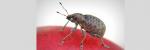 [ทำนายฝัน-ตัวเลข] ฝันว่ามีแมลงออกมาจากหูของคุณ