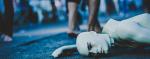 [ทำนายฝัน-ตัวเลข] ฝันว่าแฟนของคุณตาย,ฝันว่าแฟนของคุณเสียชีวิต