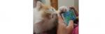 [ทำนายฝัน-ตัวเลข] ฝันว่าแมวหายกำลังเอาเท้าสะกิดคุณ