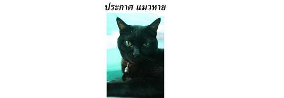 [ทำนายฝัน-ตัวเลข] ฝันว่าแมวหาย,ฝันว่าหาแมวไม่เจอ
