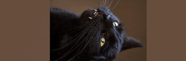 [ทำนายฝัน-ตัวเลข] ฝันว่าโดนแมวดำกัด