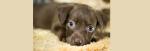 [ทำนายฝัน-ตัวเลข] ฝันว่าได้รับหมามาเลี้ยง , ฝันว่าได้รับสุนัขมาเลี้ยง