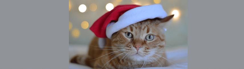 [ทำนายฝัน-ตัวเลข] ฝันว่าได้รับแมวมาเลี้ยง,ฝันว่าได้เลี้ยงแมว