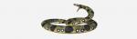 [ทำนายฝัน-ตัวเลข] ฝันเห็นงูยักษ์ , ฝันเห็นงูอนาคอนดา