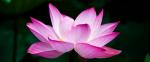 [ทำนายฝัน-ตัวเลข] ฝันเห็นดอกไม้บาน