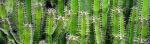 [ทำนายฝัน-ตัวเลข] ฝันเห็นต้นกระบองเพชร