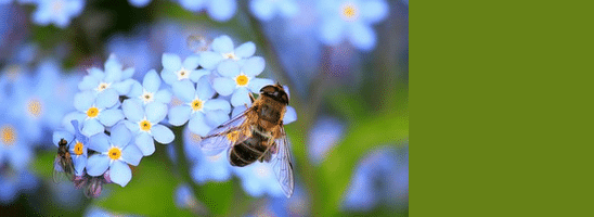 [ทำนายฝัน-ตัวเลข] ฝันเห็นผึ้ง