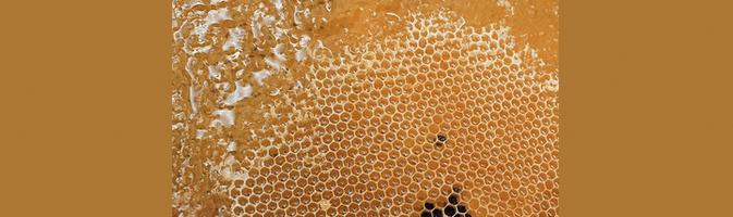 [ทำนายฝัน-ตัวเลข] ฝันเห็นรังผึ้ง,ฝันเห็นรวงผึ้ง