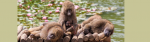 [ทำนายฝัน-ตัวเลข] ฝันเห็นลิง