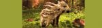 [ทำนายฝัน-ตัวเลข] ฝันเห็นหมูป่า
