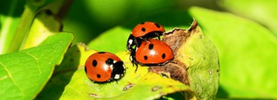 [ทำนายฝัน-ตัวเลข] ฝันเห็นแมลงเต่าทองคลานยั้วเยี้ยเต็มไปหมด