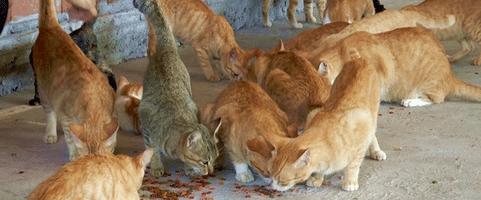 [ทำนายฝัน-ตัวเลข] ฝันเห็นแมวจำนวนมากวิ่งไปมาอยู่ในบ้าน