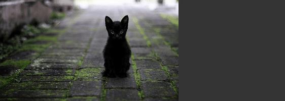 [ทำนายฝัน-ตัวเลข] ฝันเห็นแมวดำ