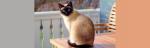 [ทำนายฝัน-ตัวเลข] ฝันเห็นแมวตาสีฟ้า