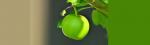 [ทำนายฝัน-ตัวเลข] ฝันเห็นแอปเปิ้ลสีเขียว