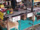 ฝันเห็นร้านขายสัตว์เลี้ยง , ฝันว่าคุณอยู่ที่ร้านขายสัตว์เลี้ยง