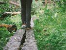 ฝันว่าคุณกำลังเดินบนไม้กระดาน ,ฝันว่าคุณกำลังเดินบนแผ่นกระดาน ,ฝันว่าคุณกำลังเดินบนสะพานไม้เล็กๆ