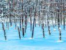 ฝันเห็นบ่อน้ำที่เป็นน้ำแข็ง,ฝันเห็นบ่อน้ำที่เย็นจนเป็นน้ำแข็ง