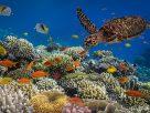 ฝันเห็นปะการัง , ฝันว่าได้ดำน้ำดูปะการัง